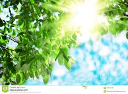 sun-leaves-green-leaves-background-blue-sky-sun-sunshine-sunrays-trees-43547538
